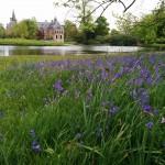 Kasteel Twickel achter - voorjaar bluebells 2 -LdO