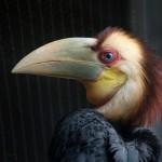 Jaarvogelkuiken is uitgevlogen  Foto ARTIS Ronald van Weeren